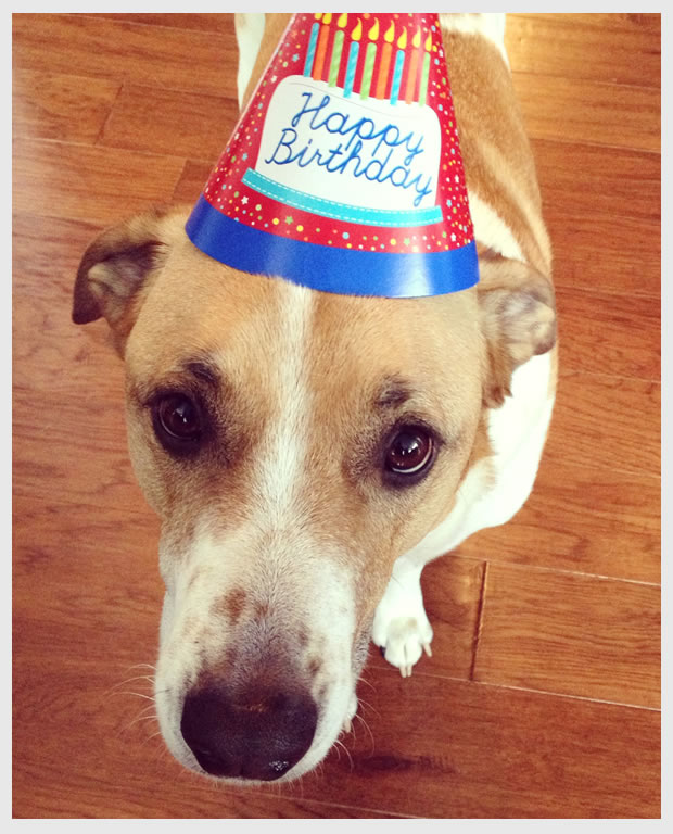 Happy Birthday, Cooper Dog!
