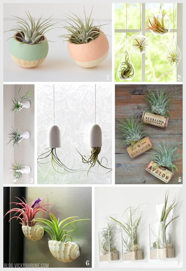 Things I Love: Air Plants