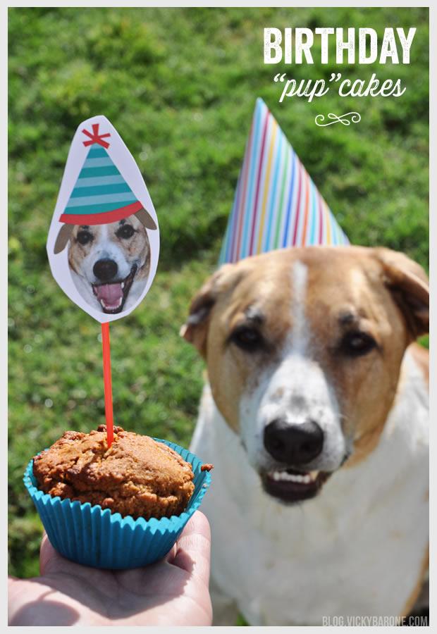 Happy 8th Birthday, Cooper Dog!